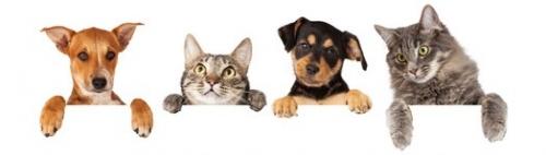Inkontinenzartikel für Hunde und Katzen